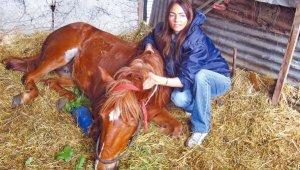 Dolores Oliva, veterinaria argentina