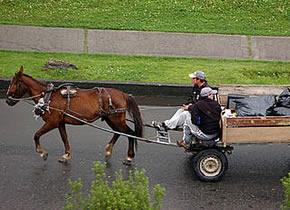 Vehículo de tracción animal