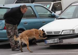 Caninos maltratados